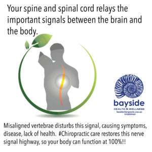 bayside-spinal-function-image